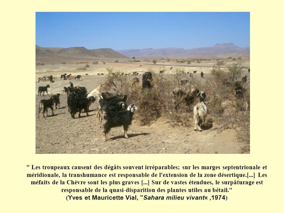 Les troupeaux causent des dégâts souvent irréparables; sur les marges septentrionale et méridionale, la transhumance est responsable de l extension de la zone désertique.[...] Les méfaits de la Chèvre sont les plus graves [...] Sur de vastes étendues, le surpâturage est responsable de la quasi-disparition des plantes utiles au bétail. (Yves et Mauricette Vial, Sahara milieu vivant« ,1974)